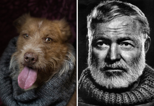 Hemingway- Poetic Dogs